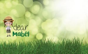 dear-mabel-lawn